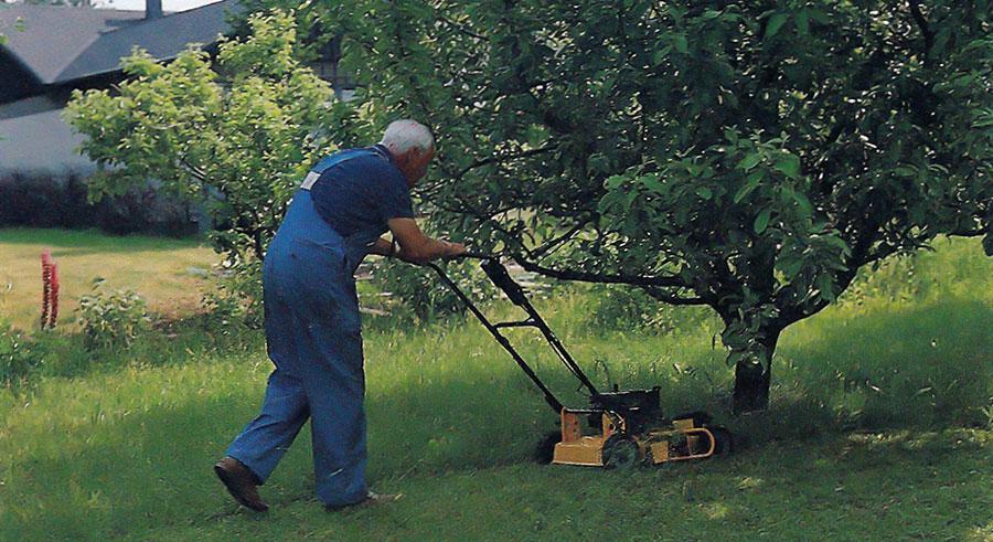 Klipper gräs under träd