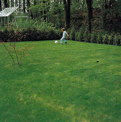 Spelar fotboll på gräsmatta