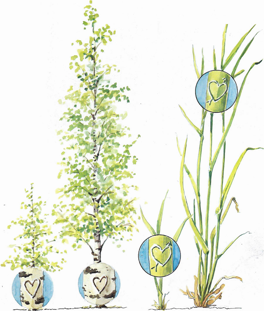grasplanta-vs-trad
