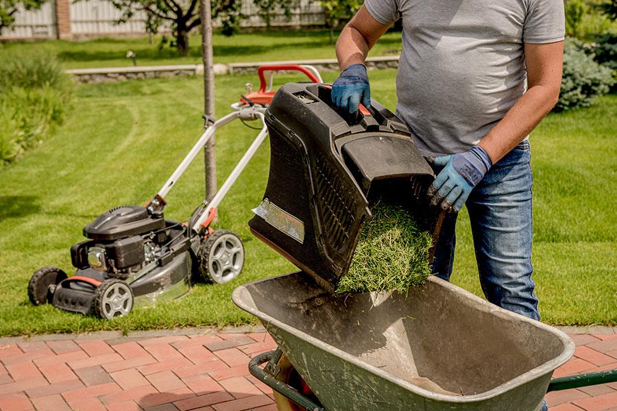 Nyklippt gräs för kompostering