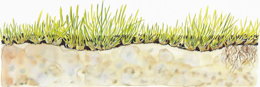 Ojämn gräsmatta