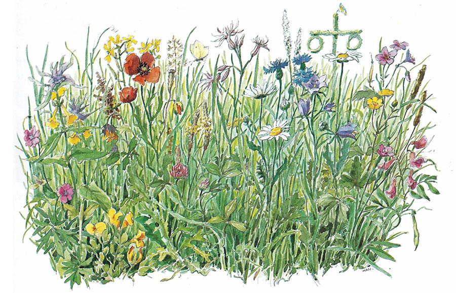 Sommaräng med gräs och blommor