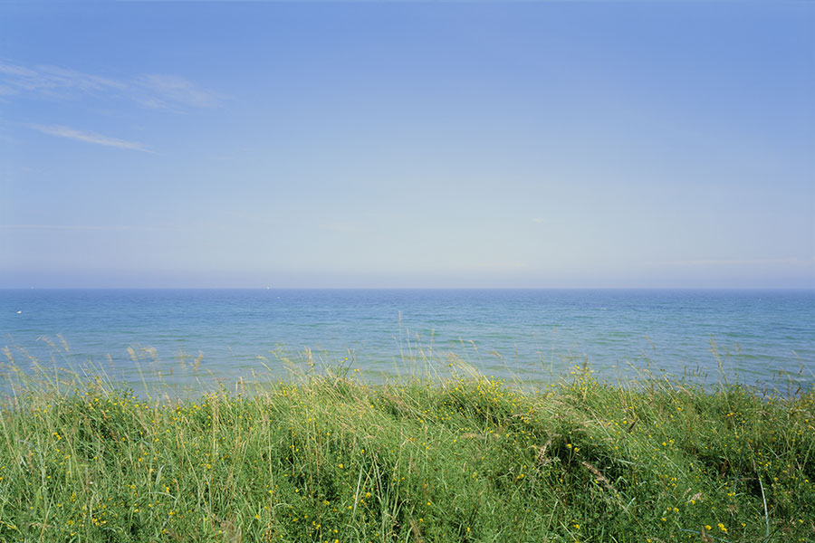 Strandäng med gräs och blomster