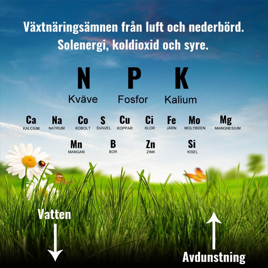 Växelspel och växtnäring för gräsmattan