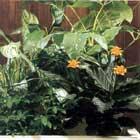 växter ökar fuktigheten och fuktskador inomhus