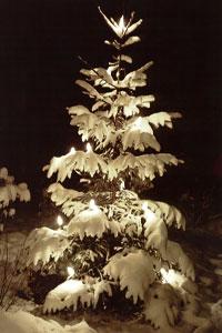 Julgransbelysning
