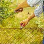 Reparera först skador i staketet med ståltråd av samma grovlek som staketet