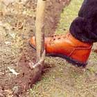 Skär med trädgårdsspaden