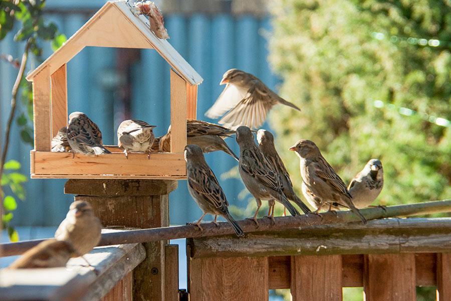Småfåglar vid fågelbord med sadeltak