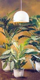 brokbladiga-vaxter-kraver-med-ljus