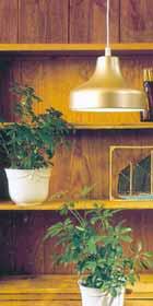 Växter längre in i rummet behöver extra ljus
