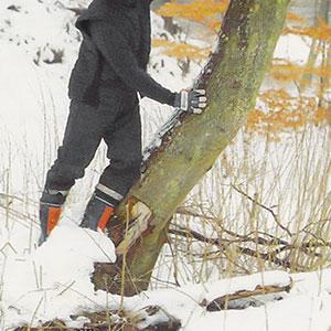 Krokig trädstam som påverkar fallriktningen.