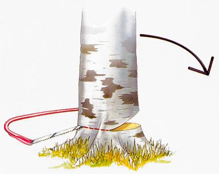Illustration som visar riktskäret som styr åt vilket håll trädet ska falla