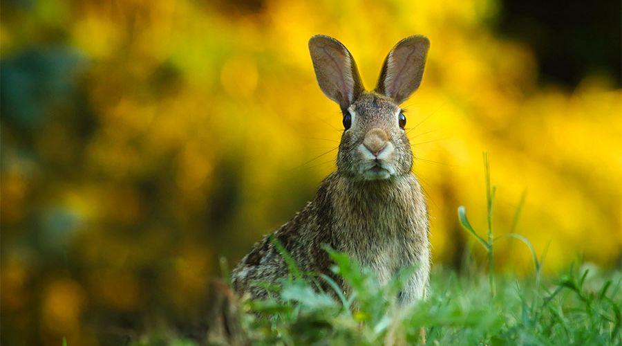 storre-skadedjur-en-hare.jpg